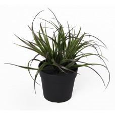 Изкуствено растение в саксия - Тиландсия