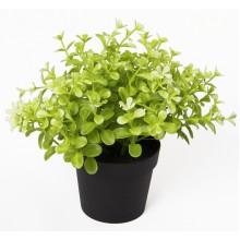 Изкуствено растение в саксия - Чемшир